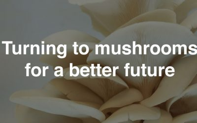 Turning to mushrooms for a better future